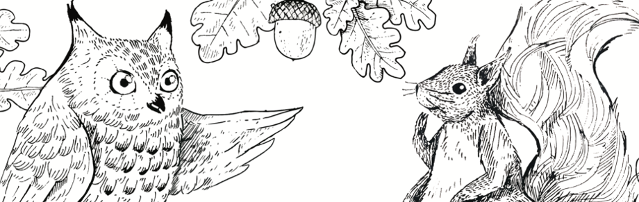 squirrel owl banner